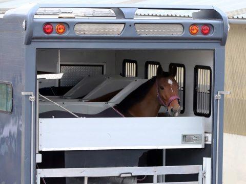 Equine Export 2 Final